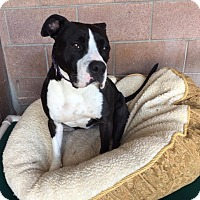 Adopt A Pet :: Pickles - Chico, CA
