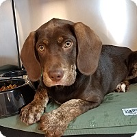 Adopt A Pet :: Scooter - Seneca, SC