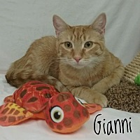 Adopt A Pet :: Gianni - Kendallville, IN
