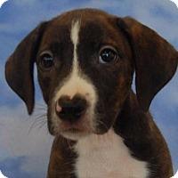 Adopt A Pet :: Zola - Richmond, IN