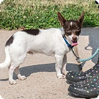 Adopt A Pet :: Slater - Bridgewater, NJ
