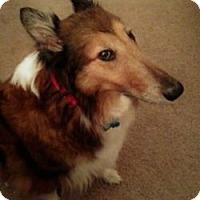 Adopt A Pet :: MYA - Dublin, OH