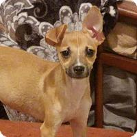 Adopt A Pet :: Candace Parker - Jersey City, NJ