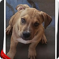 Adopt A Pet :: Briggs - Apache Junction, AZ