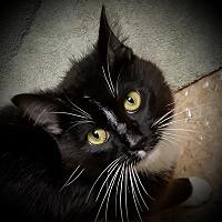 Adopt A Pet :: Amzi - Sheboygan, WI