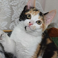Adopt A Pet :: Fancy - Bristol, CT
