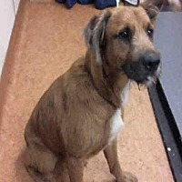 Adopt A Pet :: *MILO - Sacramento, CA
