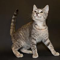 Adopt A Pet :: Diva - Pasadena, CA