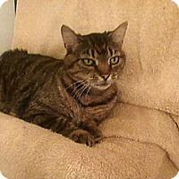 Adopt A Pet :: City Kitty - Delmont, PA