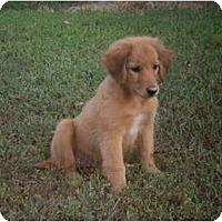Adopt A Pet :: Lilly (adoption pending) - Adamsville, TN