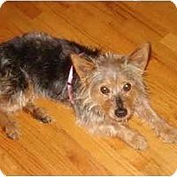 Adopt A Pet :: Abigail - Columbia, SC