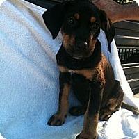 Adopt A Pet :: Rascal - Russellville, AR