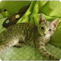 Adopt A Pet :: Moonshine - Modesto, CA