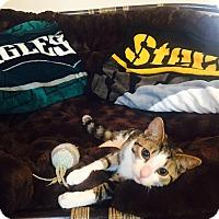 Adopt A Pet :: Max - Pittstown, NJ