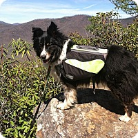 Adopt A Pet :: Zoe VIDEO! - Columbia, SC