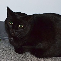 Adopt A Pet :: Spooky - Lincoln, NE