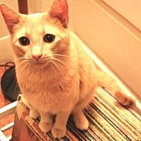 Adopt A Pet :: Bean - Castro Valley, CA