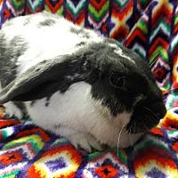 Adopt A Pet :: Rapunzel - Erie, PA