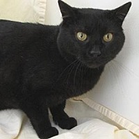 Adopt A Pet :: Potomac - Milwaukee, WI