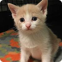 Adopt A Pet :: Hala - Ortonville, MI