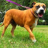 Adopt A Pet :: Darlene - Simsbury, CT