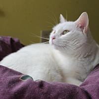Adopt A Pet :: Skylar - Middletown, NY