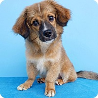 Adopt A Pet :: Fritz - La Mirada, CA
