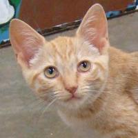 Adopt A Pet :: Patsy - Greenfield, IN