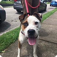 Adopt A Pet :: Timmy - Columbia, TN
