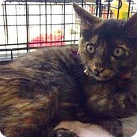 Adopt A Pet :: Katya - Spring, TX