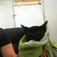 Adopt A Pet :: JIM - San Martin, CA