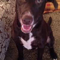 Adopt A Pet :: Brown - Princeton, KY