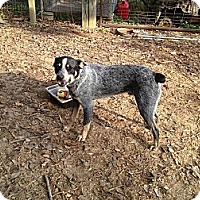 Adopt A Pet :: Woody - Conway, AR