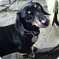 Adopt A Pet :: Jake - NJ - Jacobus, PA