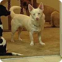 Adopt A Pet :: Rudy - Hilliard, OH