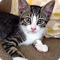 Adopt A Pet :: Dallas - Narberth, PA