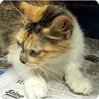 Adopt A Pet :: Penny - Mobile, AL