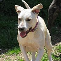 Adopt A Pet :: Aphrodite - Okmulgee, OK