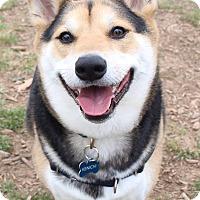 Adopt A Pet :: Kenichi - Manassas, VA