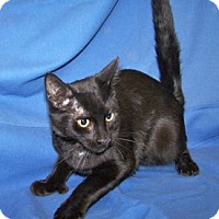 Adopt A Pet :: Kory - Colorado Springs, CO