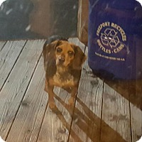 Adopt A Pet :: Harley - Freeport, NY