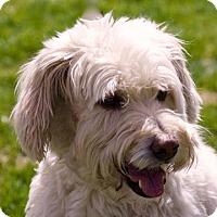 Adopt A Pet :: Rusty - Portola, CA