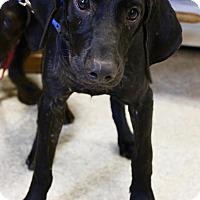 Adopt A Pet :: Sebastian - Smithtown, NY