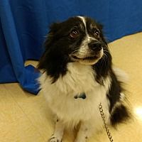 Adopt A Pet :: Spencer - Smyrna, GA