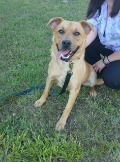 Retriever (Unknown Type) Mix Dog for adoption in Benton, Kentucky - Duncan