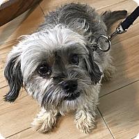 Adopt A Pet :: Paisley - Redondo Beach, CA