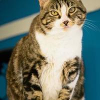 Adopt A Pet :: Tori - Tulsa, OK