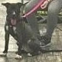 Adopt A Pet :: Annie - Harriman, TN