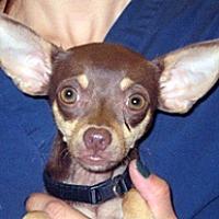Adopt A Pet :: 361474 LF - Wildomar, CA