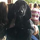 Adopt A Pet :: Big Sur Siobhan